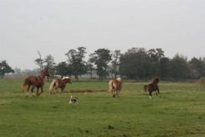 Unsere Pferde geben Gas