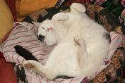 Fridolin im Winterschlaf - Katzenkoma leicht gemacht!