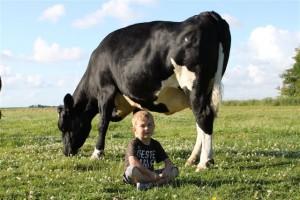 Linus hat keine Angst vor großen Kühen.