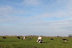 Die Herde geniesst die letzten warmen Tage