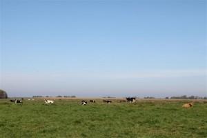 Klara wurde von allen 28 hier lebenden Rindern freundlich empfangen.