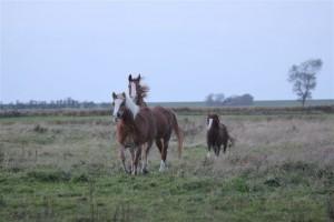 Kaspar, Lolle und Nicolina