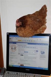 Dementi schaut (oder hackt ?) täglich auf unsere Seite bei Facebook
