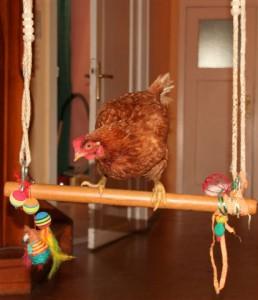 Huhn Dementi