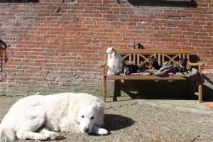 Die Hunde-Sonnenbank ist aufgestellt...