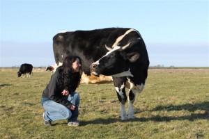 Kuh Amy begrüßt eine Besucherin
