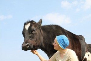 Kuh Manuela und Sonja
