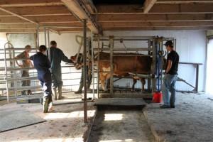 Penelope wird von zwei Tierärzten untersucht