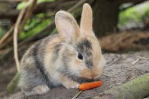 Vor einigen Tagen endeckten wir mehrere Kaninchenbabys.