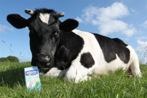 Ins Leben gerufen von Kuh Trine (Foto)
