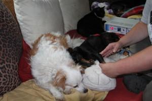Von links: Nusha, Princessa, Katze Lulu und Mastercard