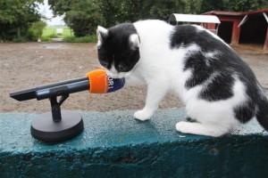 Auch Kater T4 miaute ins Mikro...