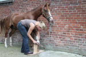Alle ein bis zwei Wochen kommt Michelle um Kaspar's Hufe zu pflegen.