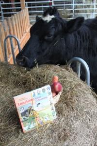 ein an Kuh Frieda adressiertes, verspätetes Geburtstagspaket.