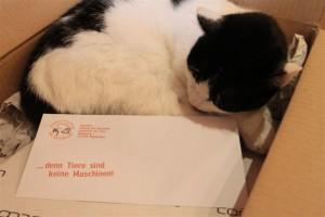 Die Briefumschläge sind angekommen.