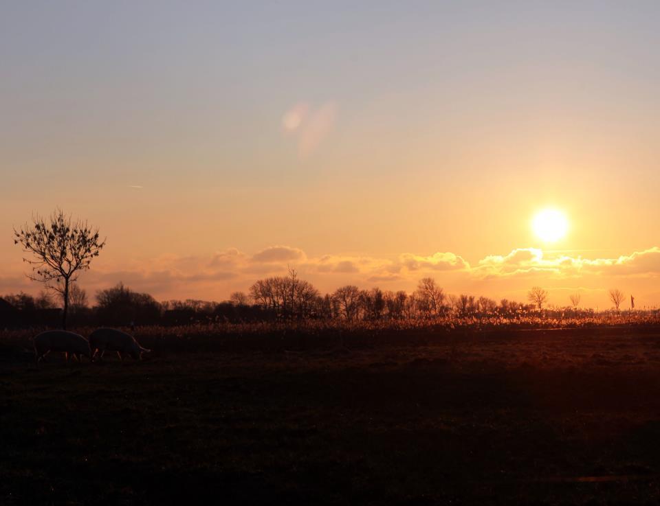 Erna und Else verbinden den Sonnenuntergangsspaziergang mit einem clorophyllhaltigen Snack.